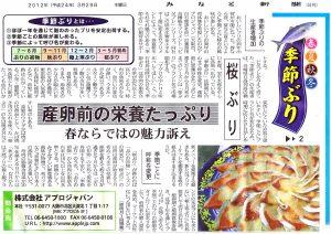 みなと新聞 20120329 季節ぶり②「桜ぶり」産卵前の栄養たっぷり、春ならではの魅力訴え